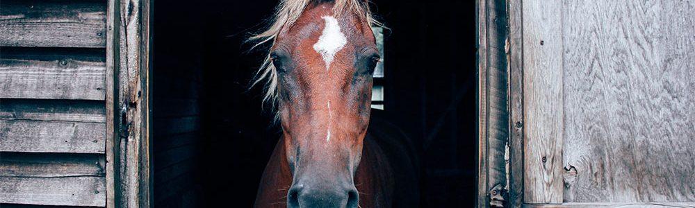 Onlineshop Pferdehaarschmuck