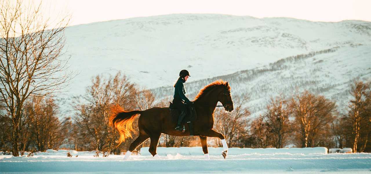 Pferdehaarschmuck Goldlinie