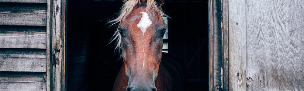 Pferdehaarschmuck Online Shop