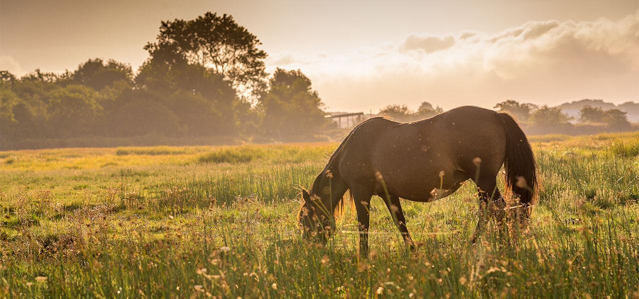 Pferdehaarschmuck Zahlungsarten